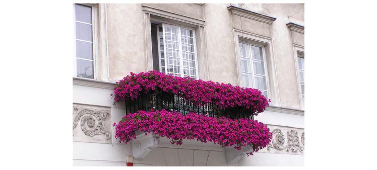 Nadeszla Wiosna Pora Kupic Kwiaty Na Balkon Kupujemykwiaty Pl